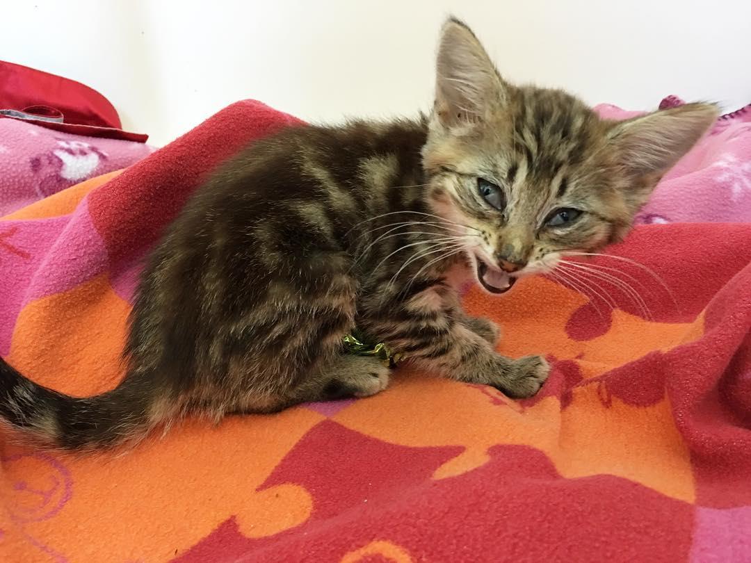 больной котенок на оранжевом покрывале