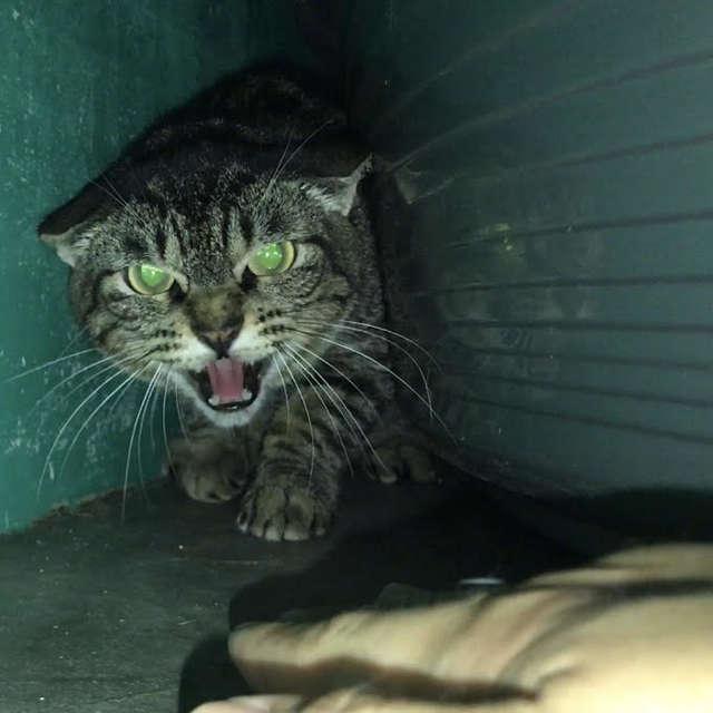 испуганный кот прячется