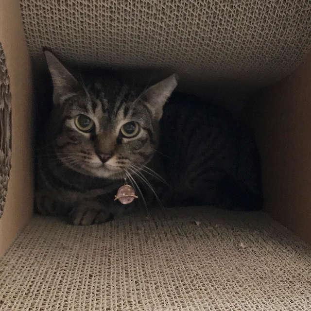 кот боится