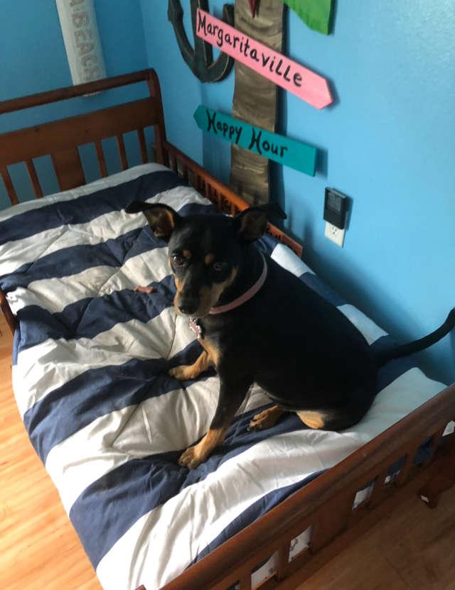 собака на отдельной кровати