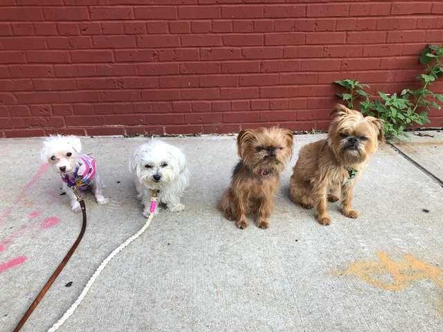 четыре собаки на прогулке