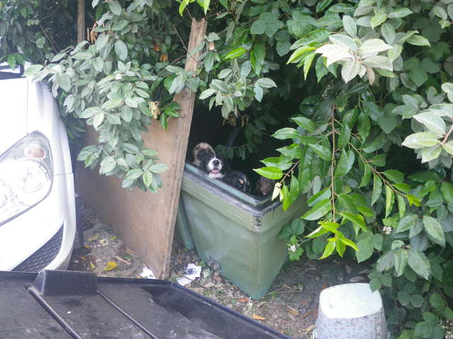 У леса стоял брошенный фургон. А рядом в контейнере жались друг к другу 9 лохматых малышей!