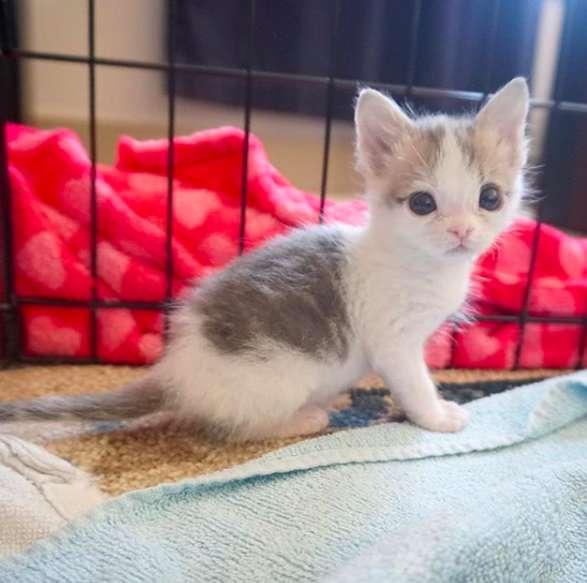Кошка закопала котёнка, но он всё равно полз на свет! рис 7
