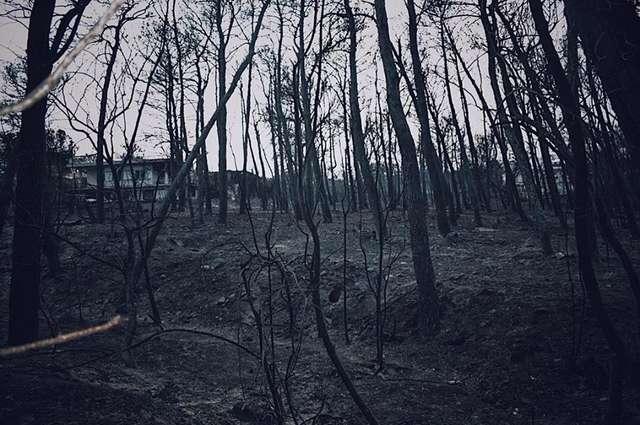 Зефирка: до и после! Он прятался в печи сгоревшего дома, как вдруг его спасли
