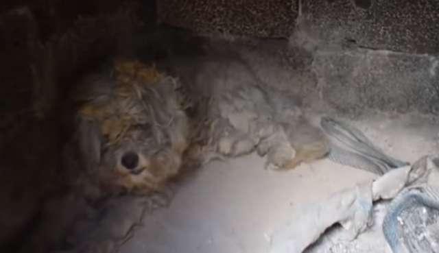 Зефирка: до и после! Он прятался в печи сгоревшего дома, как вдруг его спасли рис 2