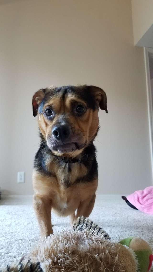 выздоровление собаки