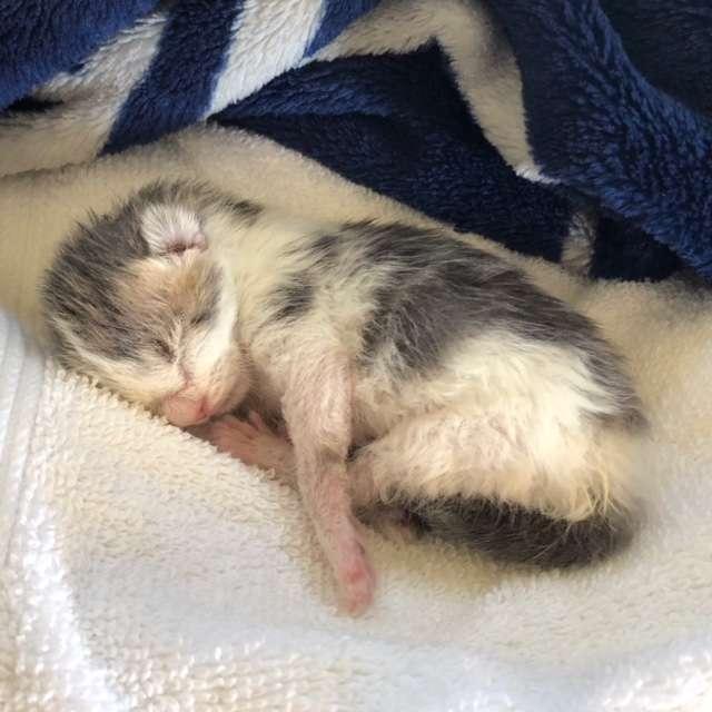 Кошка закопала котёнка, но он всё равно полз на свет! рис 4