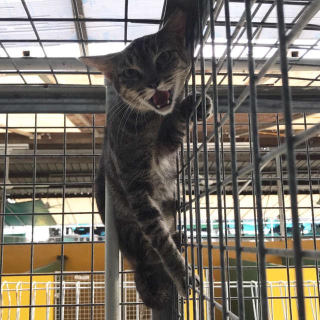 испуганный кот на клетке