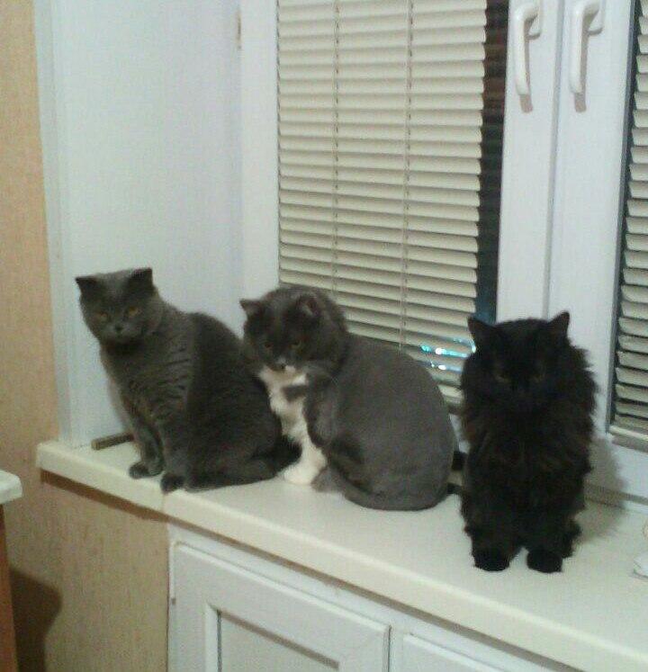 три кота на подоконнике