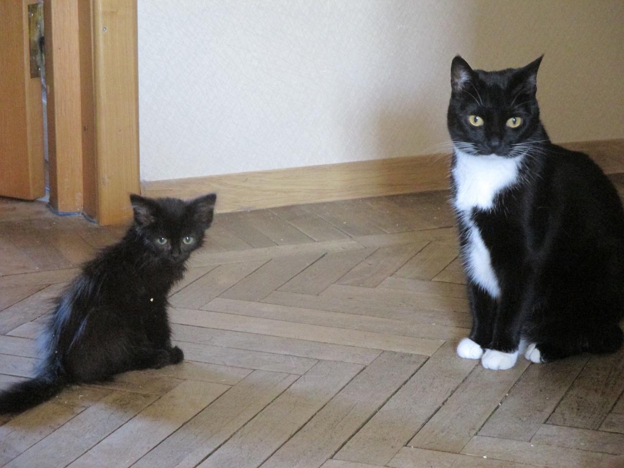 котенок сидит рядом с кошкой