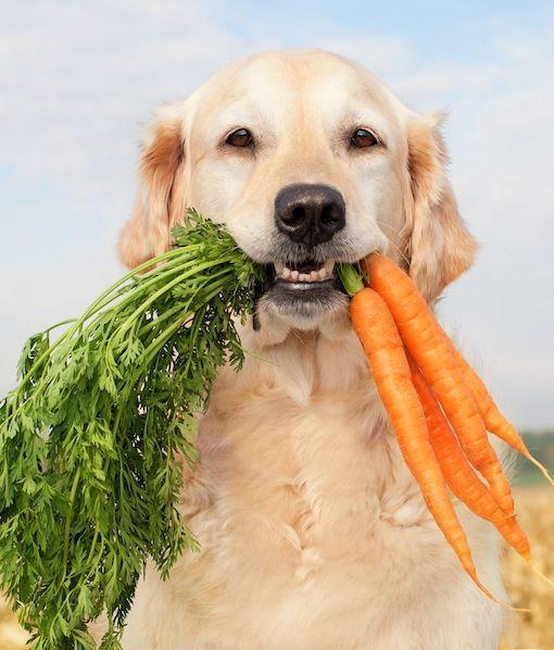 песик с морковкой