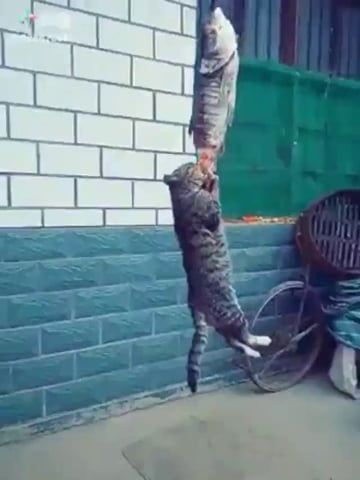 кот крадет рыбу