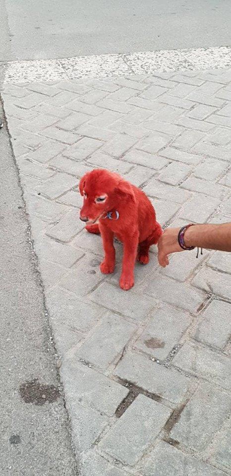 щенок красного цвета рис 2