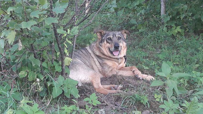 собака на улице рис 2