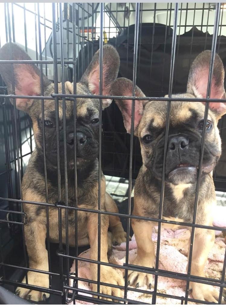 собаки сидят в клетке