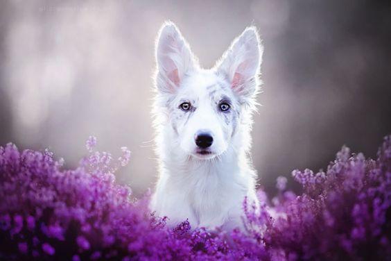 собака посреди цветов