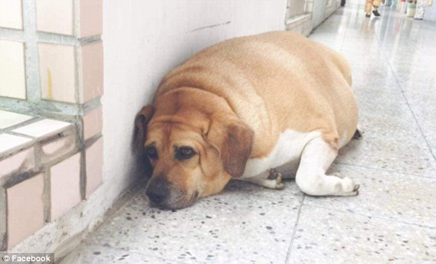 толстый пес рис 5