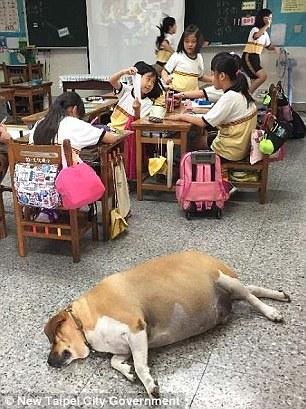 толстый пес рис 3
