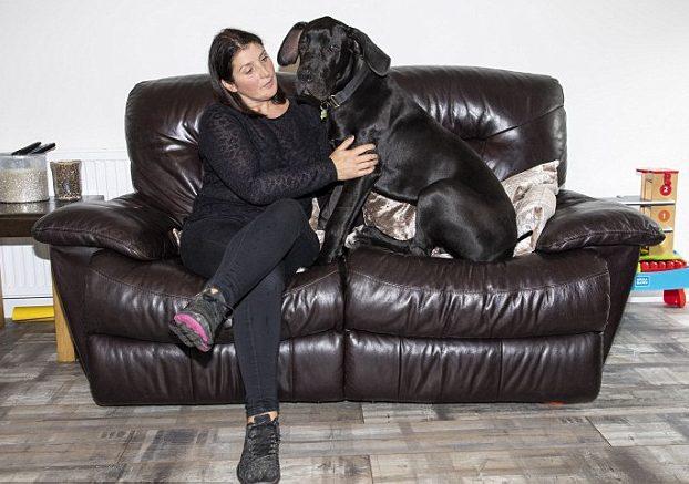 собака с хозяйкой на диване