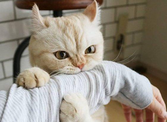 кот играет с человеком