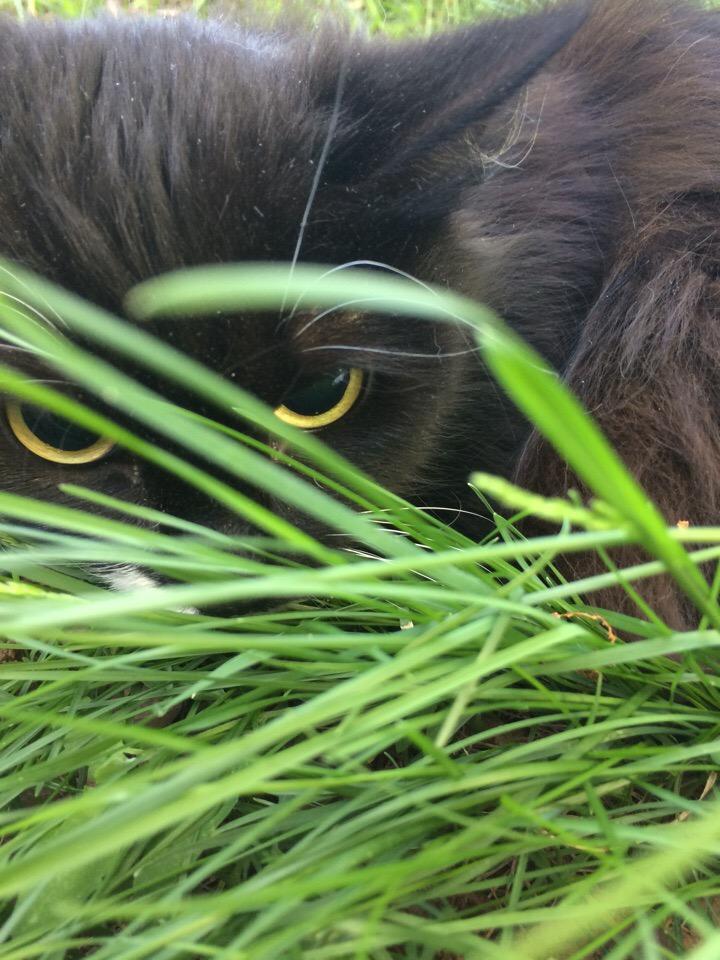 кошка сидит в траве рис 2