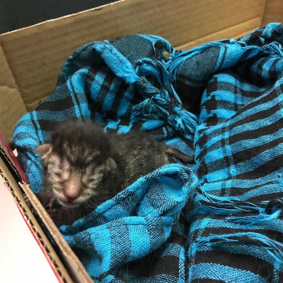 котенок в одеяле