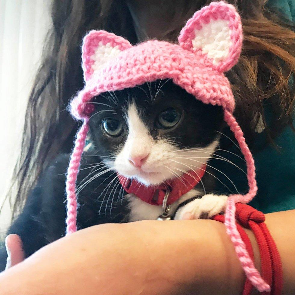 кошка в шапочке