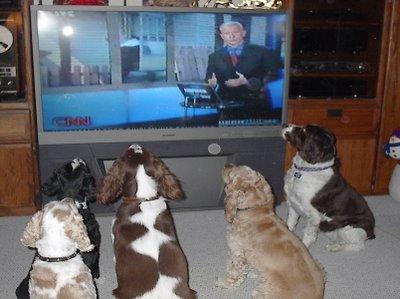 собаки у экрана