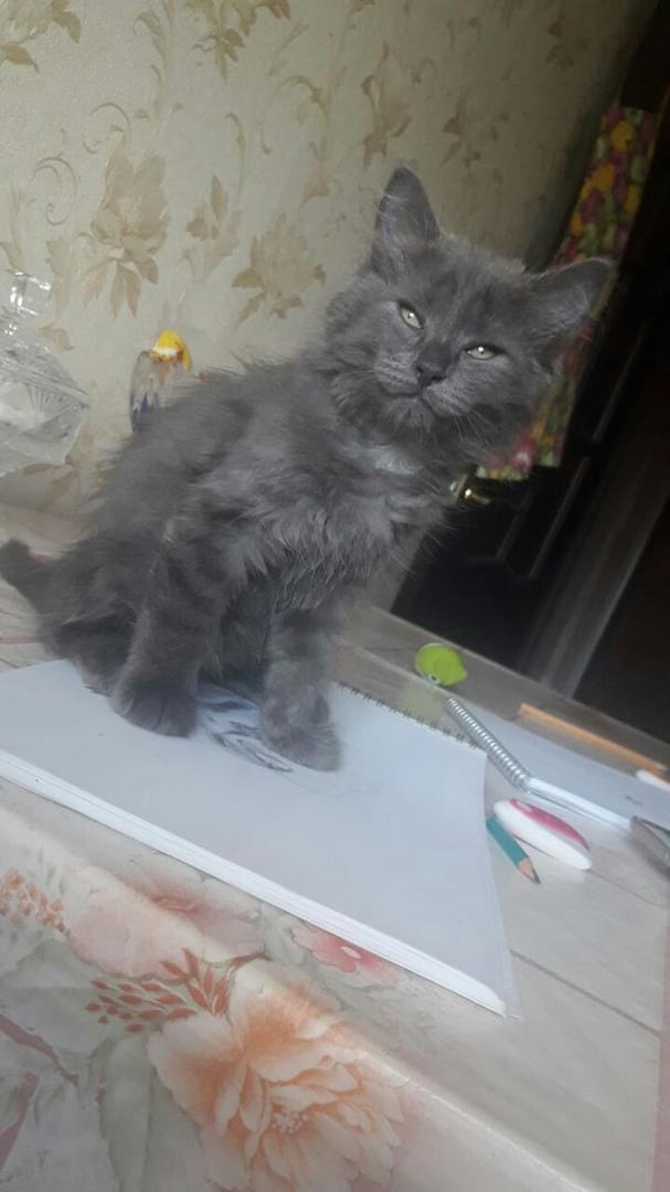 котенок сидит на столе