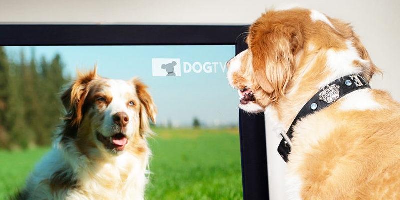 собака и ТВ
