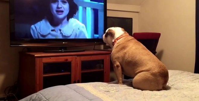 пес смотрит телевизор