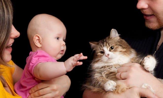 котик с ребенком