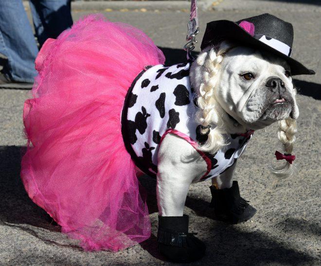 пес в розовом