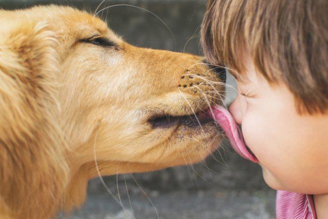 собака облизывает мальчика