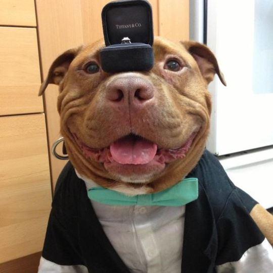 улыбающийся пес
