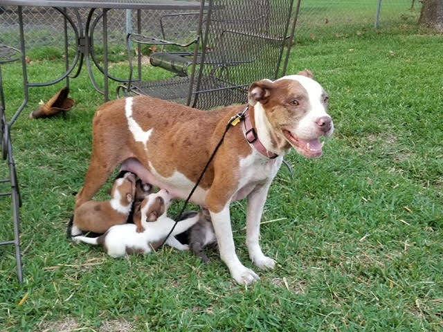 пес с щенками