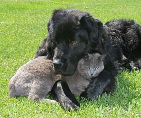 пес с котом