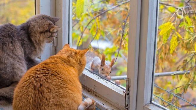 кот смотрит в окно