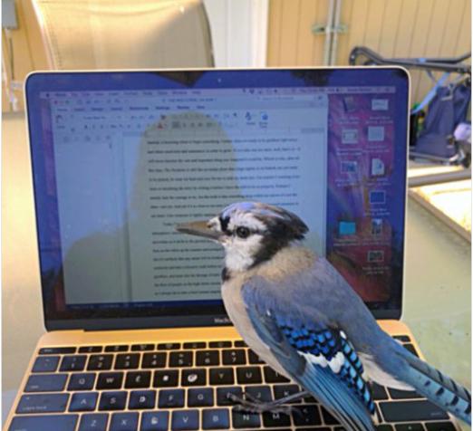 птица возле ноутбука
