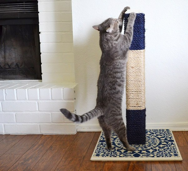 кошка точит ногти