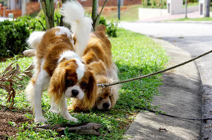 с собакой гуляют