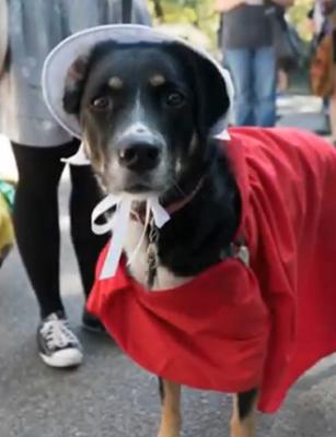 собака в красном
