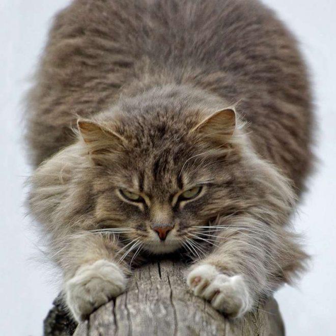 кот царапает поверхность