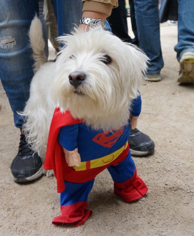 собака-супермэн