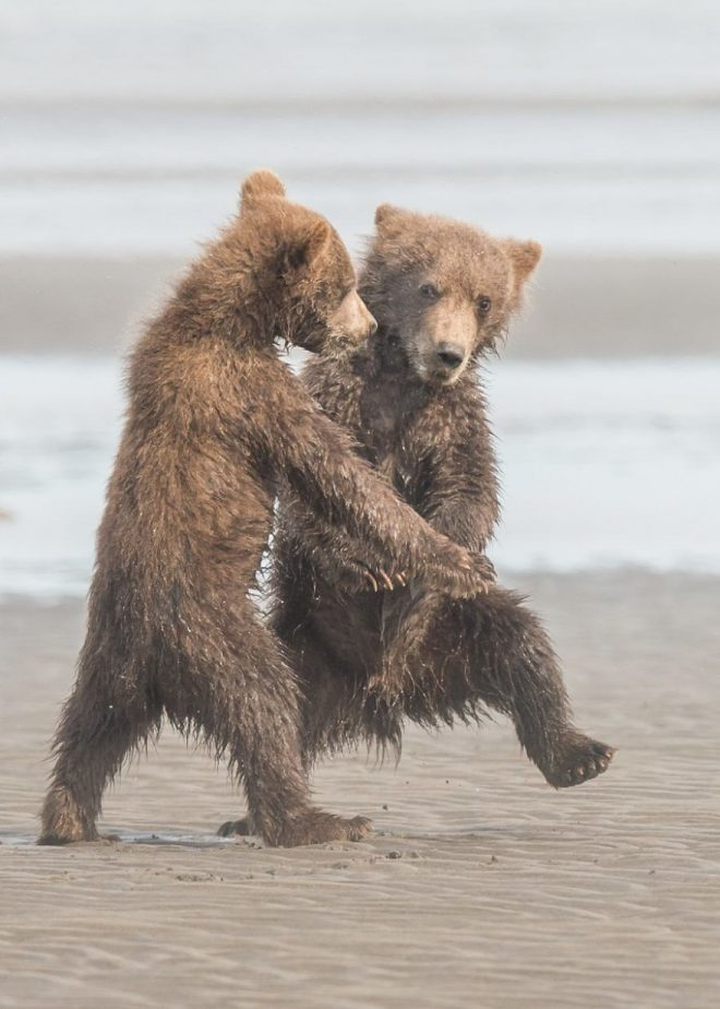 танцы медведей