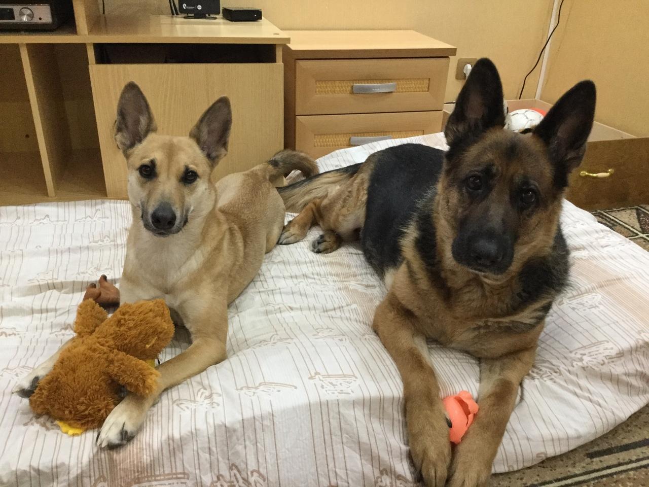две собаки на кровати