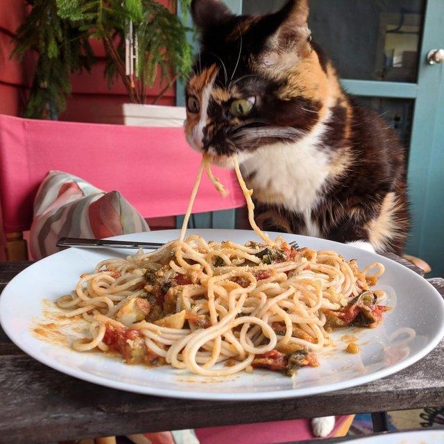 кошка ест пасту