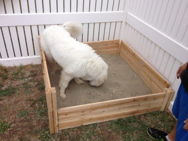 собака играется рис 2