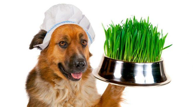 пес и трава