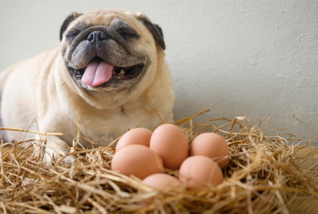 песик и яйца